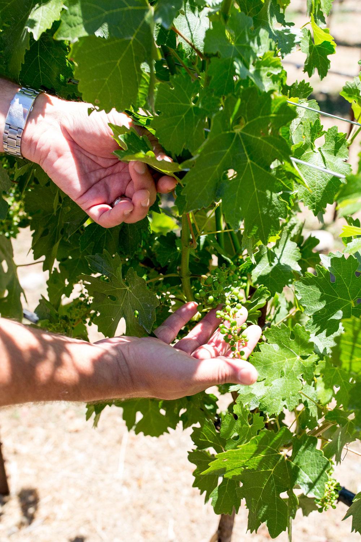 B Cellars Vineyard