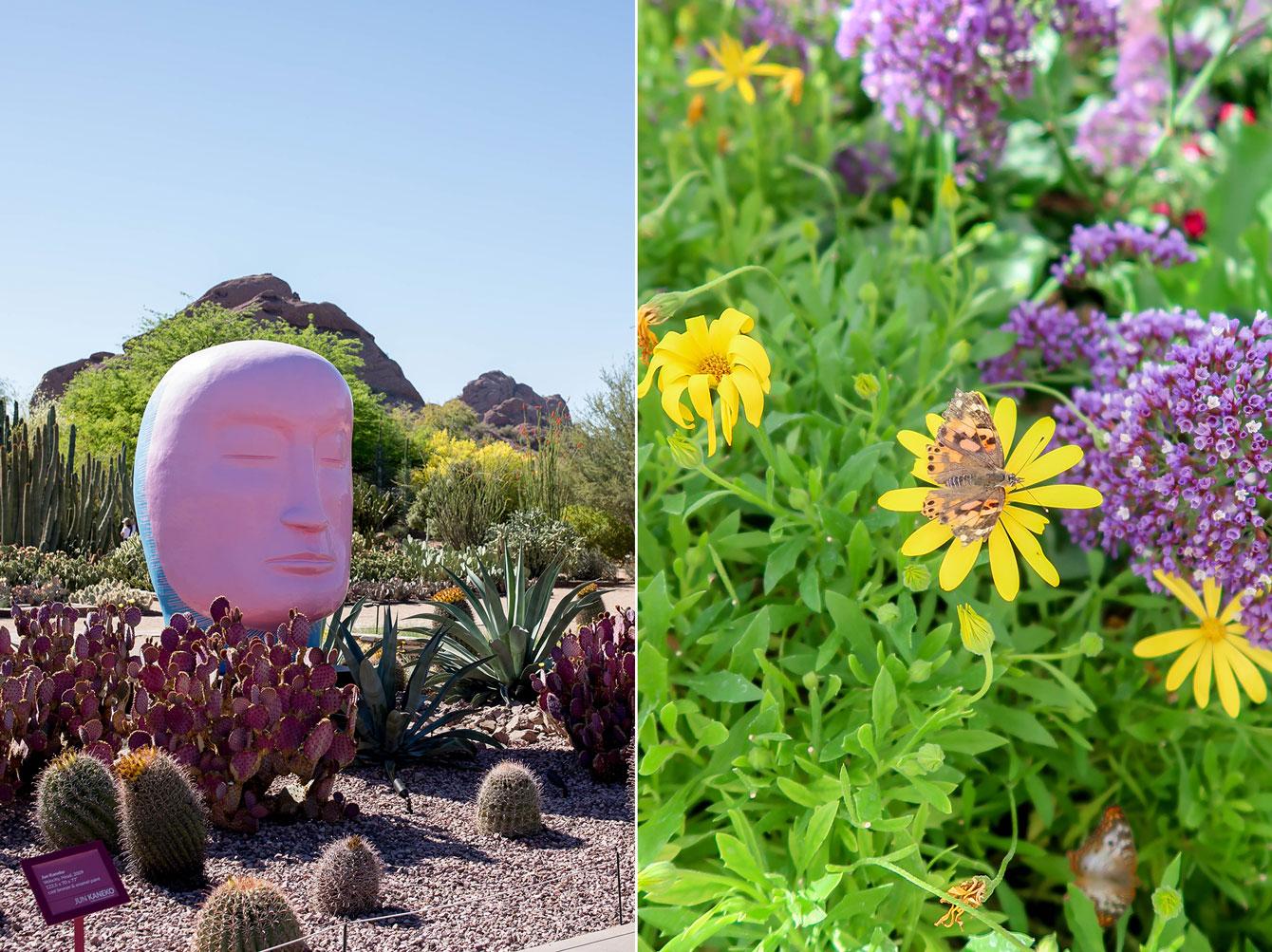 Scottsdale Botanic Gardens