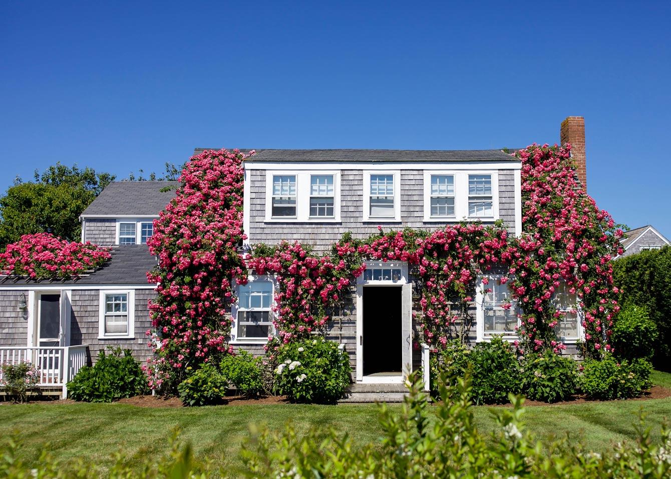 Sconset Nantucket Bluff Walk Roses