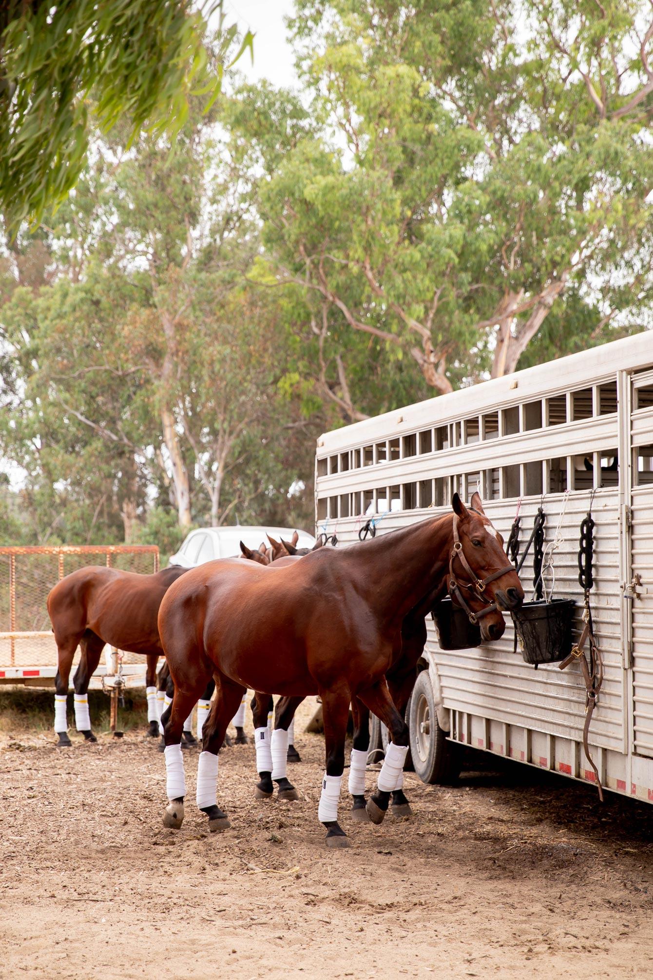 Veuve Clicquot Polo Classic Horses