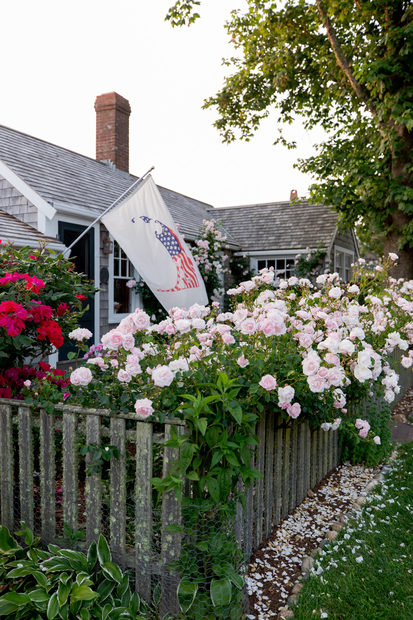 Rose Buches Nantucket