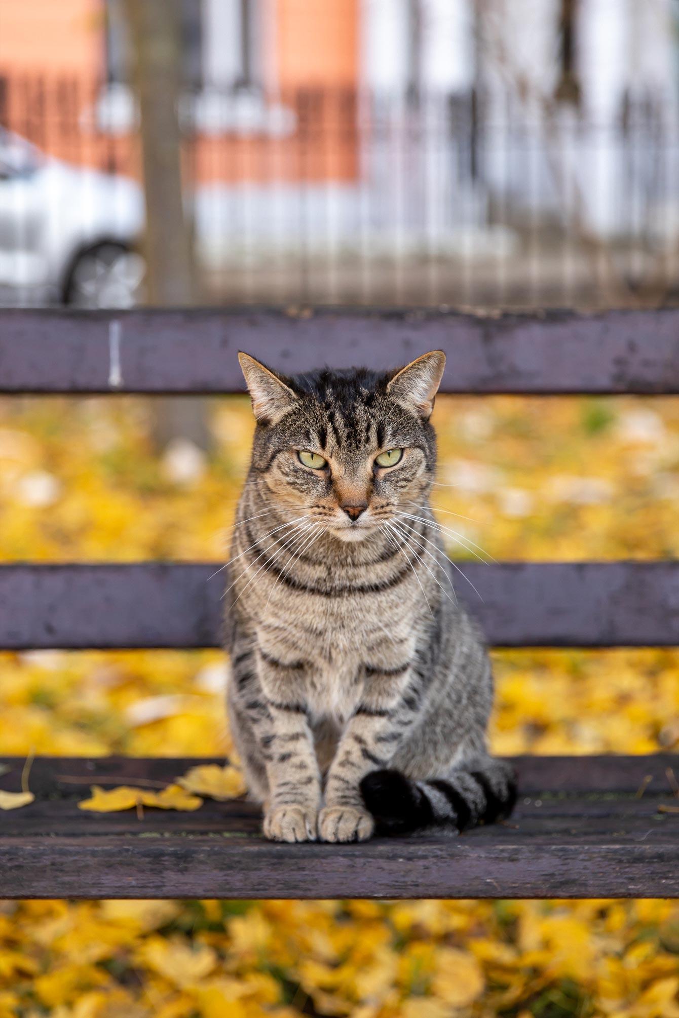 Jennifer Lake London Cat