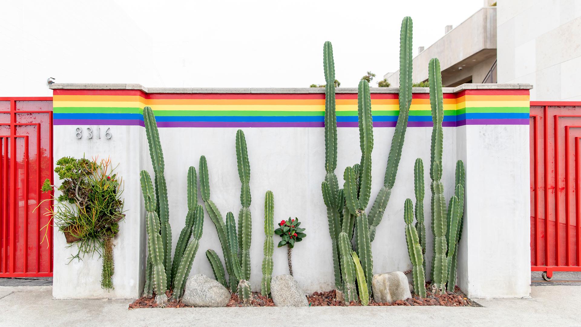 Jennifer Lake Zoom Background Rainbow Cactus Los Angeles