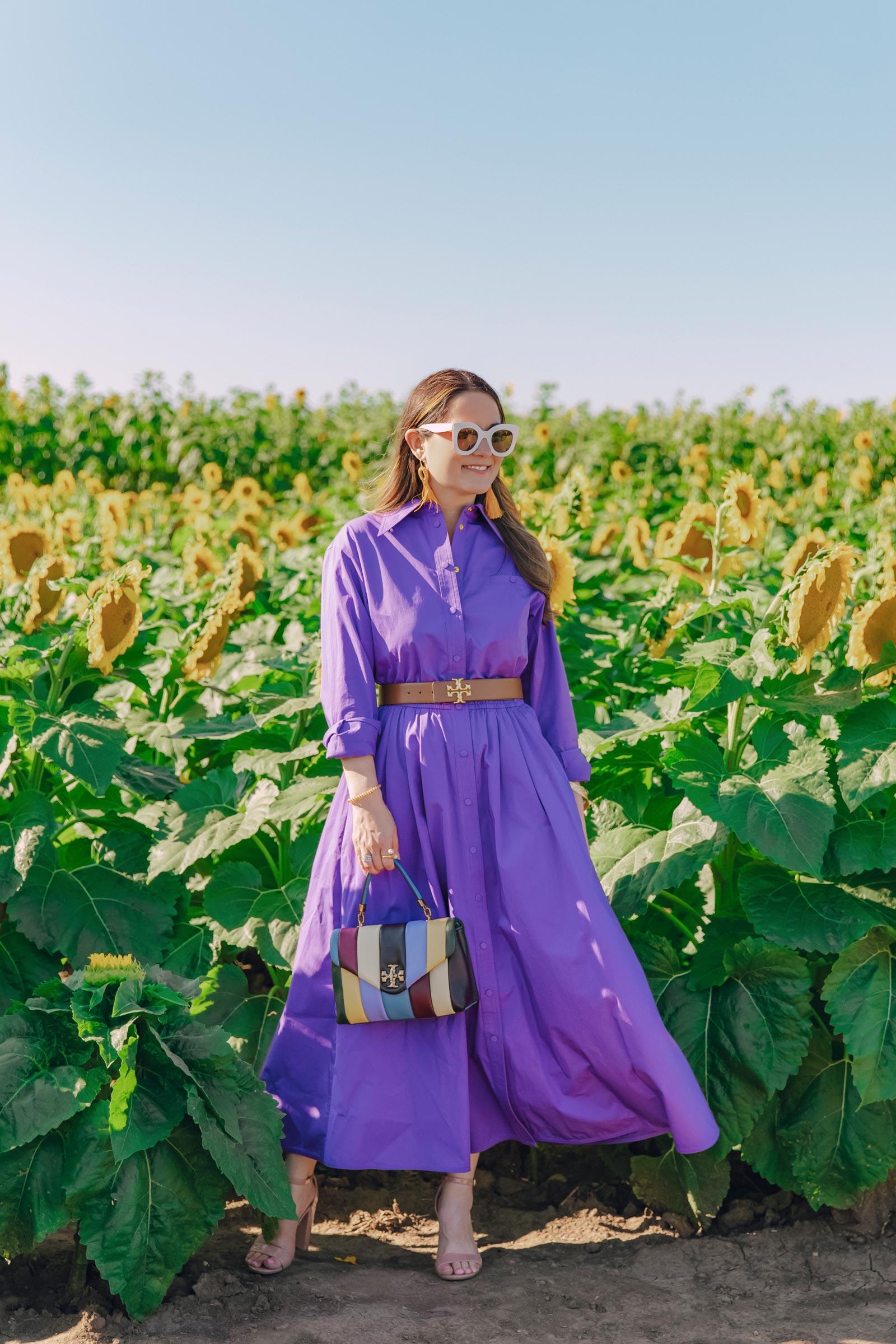 illinois sunflower farm